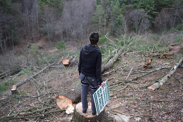 A woman standing on a stump in the middle of a clearcut.